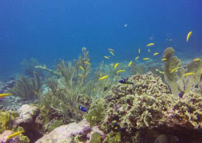 Arrecifes de Montecristi