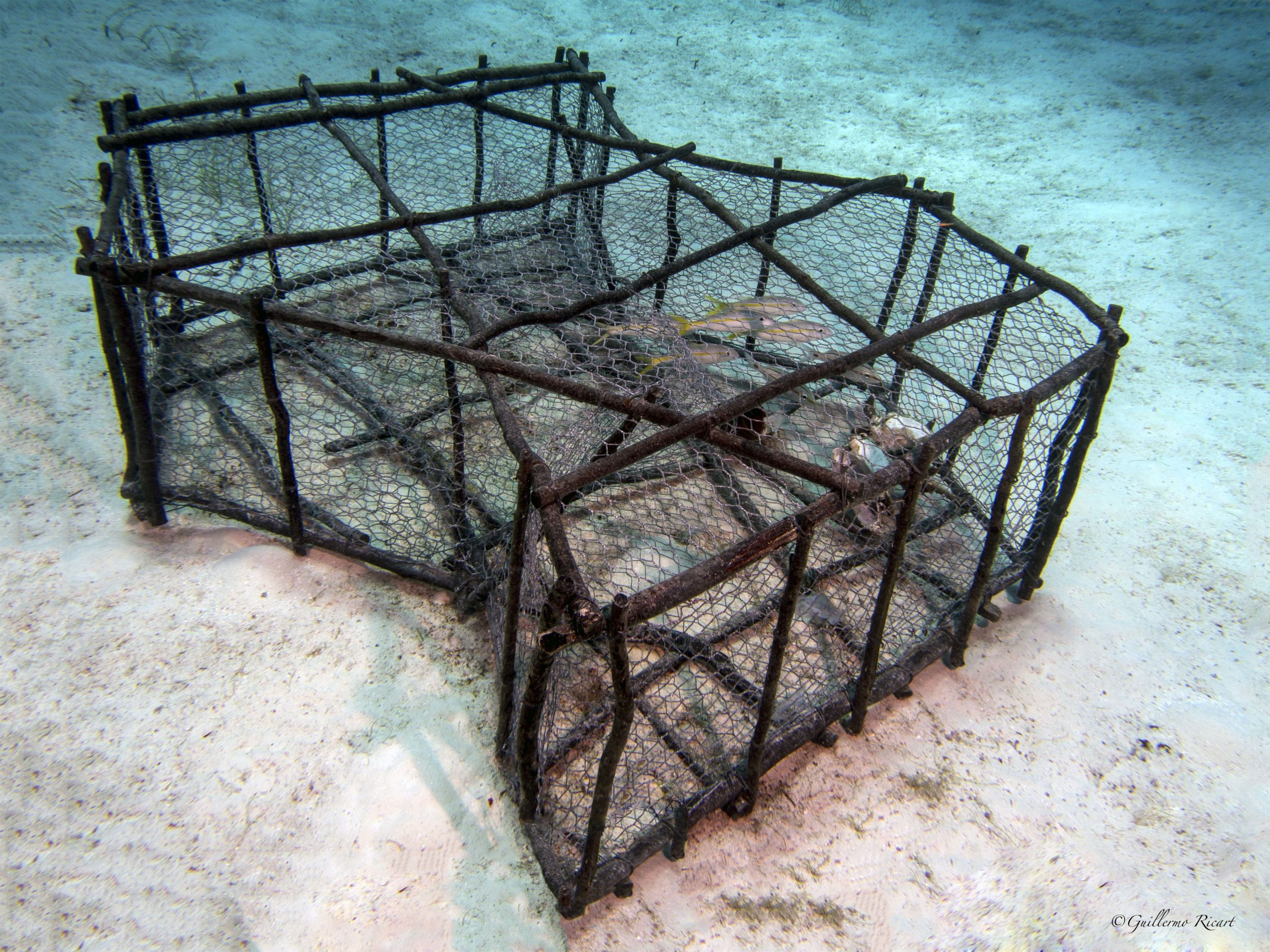 Nasa (trampa) abandonada, con criaturas marinas atrapadas. Los Frailes, Parque Nacional Jaragua.
