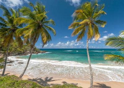 Playa Preciosa - Ricardo Briones