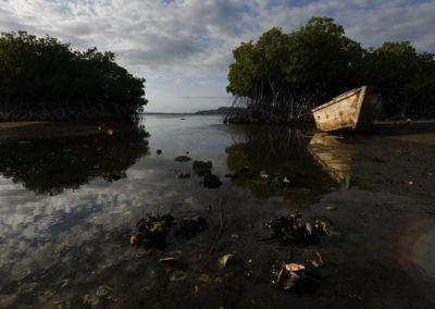 Almejas - Almejas en bajamar, manglares de la Bahia de Las Calderas, Bani, RD - Leo Salazar