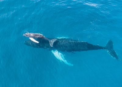 ballenas de samana