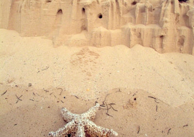 Estrella de mar sobre arenas de Bahia de las Aguilas, Pedernales, RD - Leo Salazar