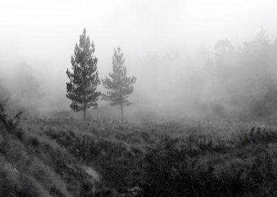 Pinos entre la niebla de la tarde, Valle Nuevo, RD - Leo Salazar
