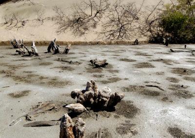 Troncos de mangle muerto, El Salao del Muerto, Las Salinas de Calderas, Bani, RD - Leo Salazar
